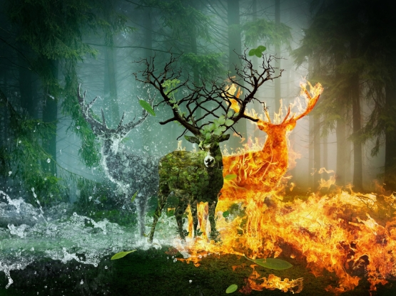 deer_fire_water_480996